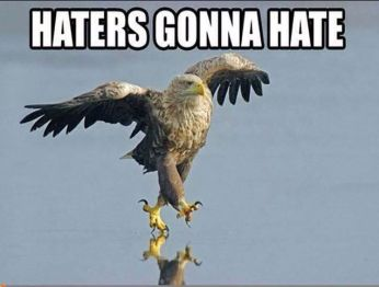434b9bc9b26b743a74e63341191d9e0a-eagles-memes-fly-eagles-fly